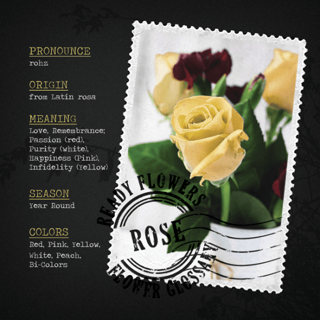 flower-glossary-rose