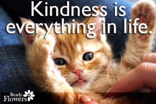 Amazingly cute kitten asking for kindness.
