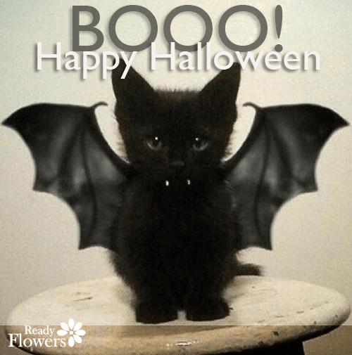 Halloween kitty in bat costume.