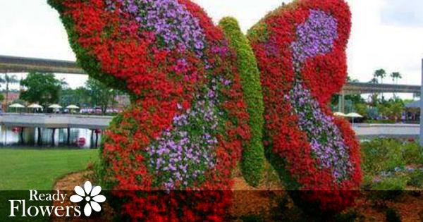 Dubai Miracle Garden Continues to Impress