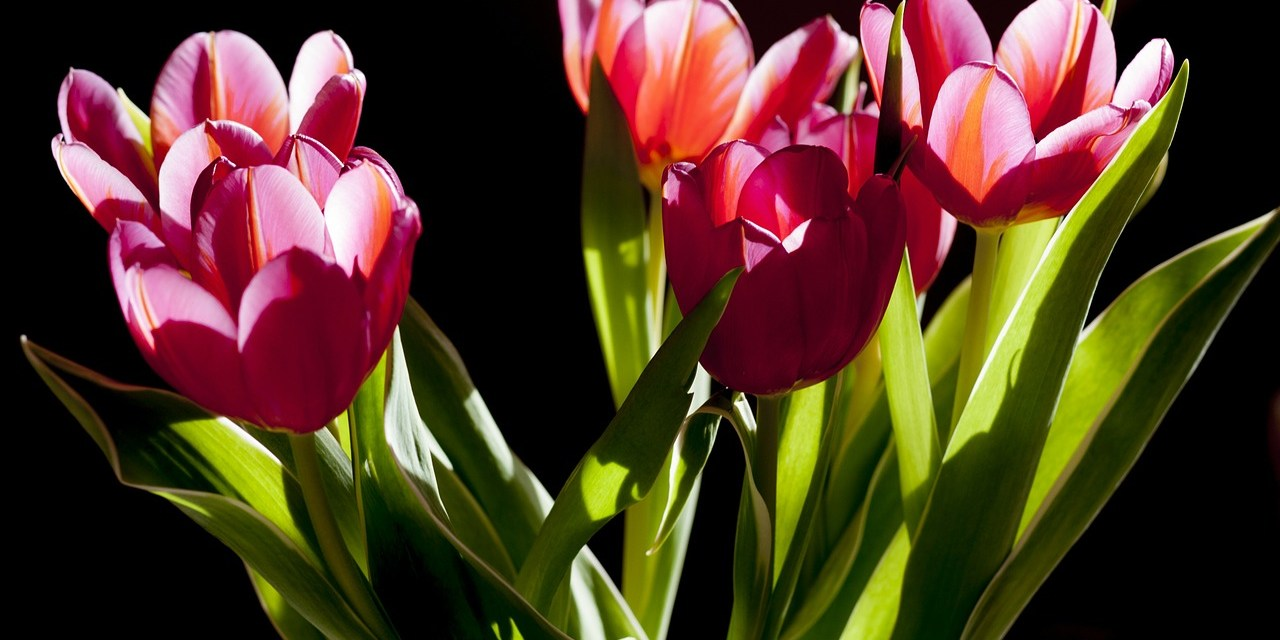 A Guide to Popular Flowers: S – Z