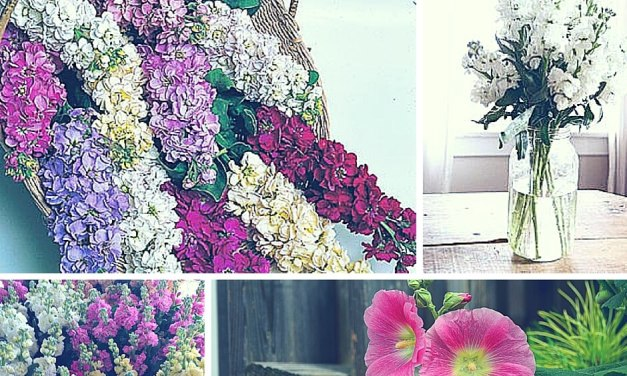 A Beginners Guide To Floral Design: 32 Most Commonly Used Flowers in Arrangement