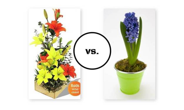 Wedding Pros and Cons: Floral Bouquets vs. Potted Plants
