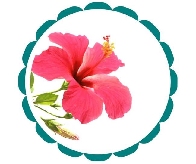 Hibiscus (Gumamela) (2)