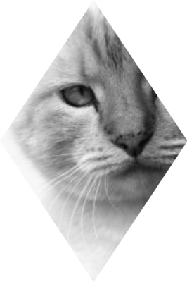 cats_uitsnede