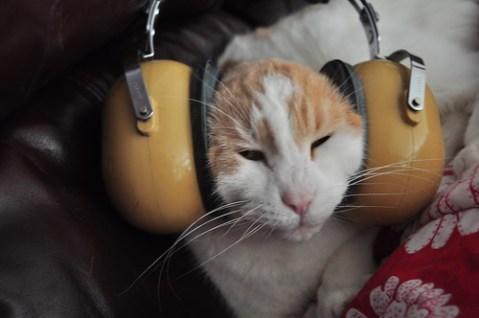 photo of cat in giant headphones