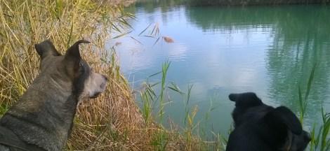 Furia Buia e Das al laghetto di Campo (pi)