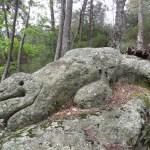 024 ramarro - Settimo Andreoni : lo scultore dei boschi di Montemagno