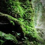 P6080183 - Candalla, il cuore verde dei monti del Camaiorese.