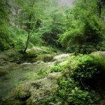 P6080189 - Candalla, il cuore verde dei monti del Camaiorese.