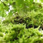P6080215 - Candalla, il cuore verde dei monti del Camaiorese.