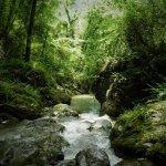 P6080216 - Candalla, il cuore verde dei monti del Camaiorese.