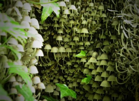 giardino degli gnomi
