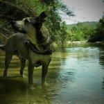 P6250327 - Il Pozzo di Serraiola sul fiume Cornia