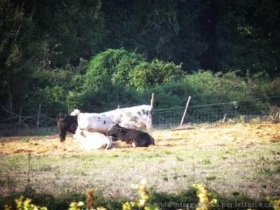 bestiame - L'Eremo di Poggio Conte e il segreto dei templari