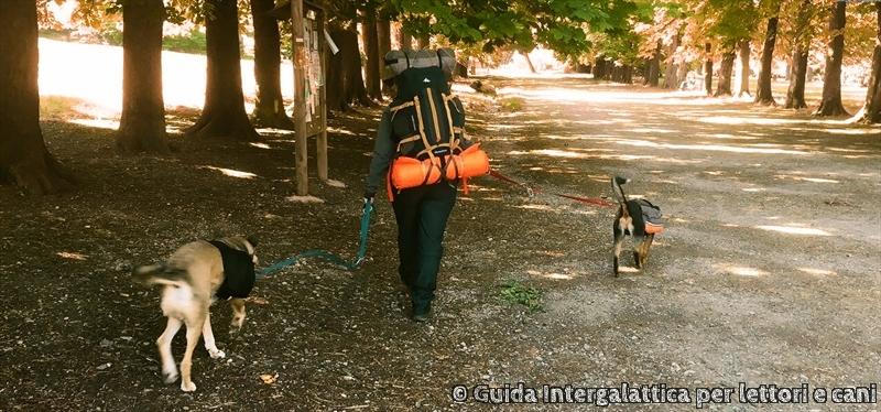 la via degli dei con il cane