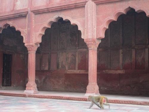 Taj Mahal monkeys