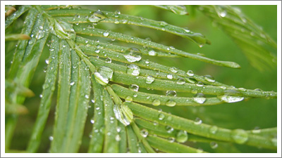metasequoia-t.jpg