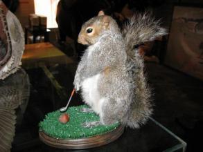 squirrel_taxidermy_golf.7871004_std