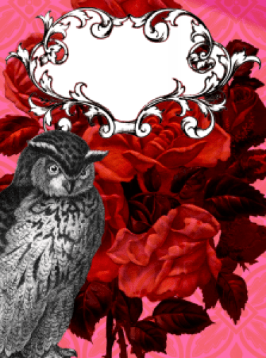 Owl Announcement