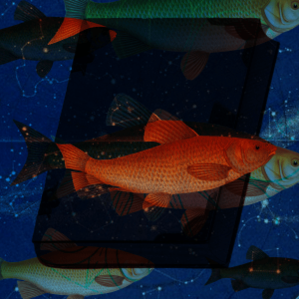 fish books