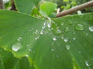 unsplash_529f6332b3995_1-wet-leave (Medium)
