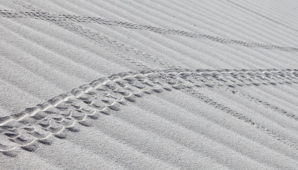 Crab tracks on the white sand
