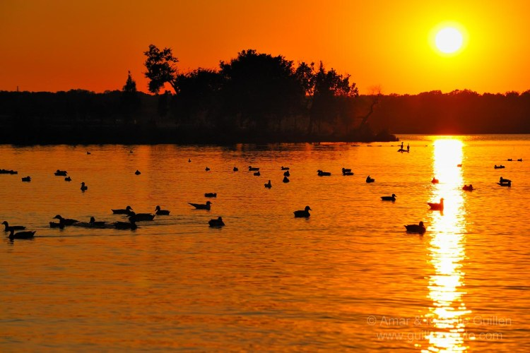 white rock lake is one of the best places to visit in dallas