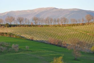 What you can see from an agriturismo in Italy