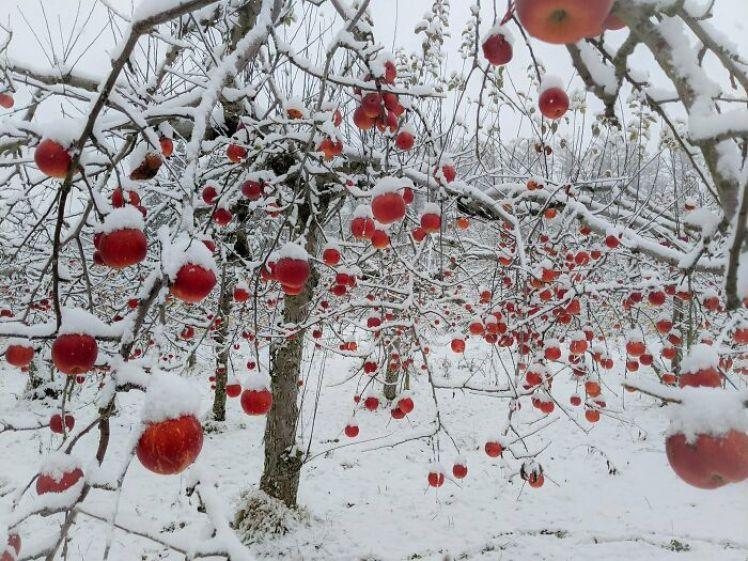 Kar Yagisi Sonrasi Medyana Gelen Ilginc Resimler 10