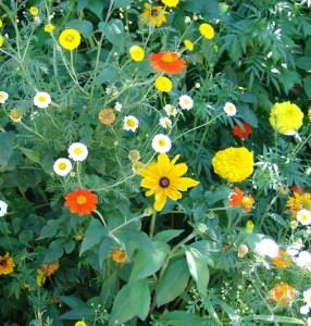 2 massif fleurs