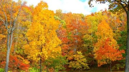 forêt_d'automne