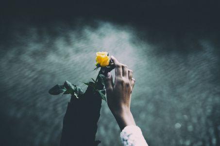 Anton Tchekhov - rose