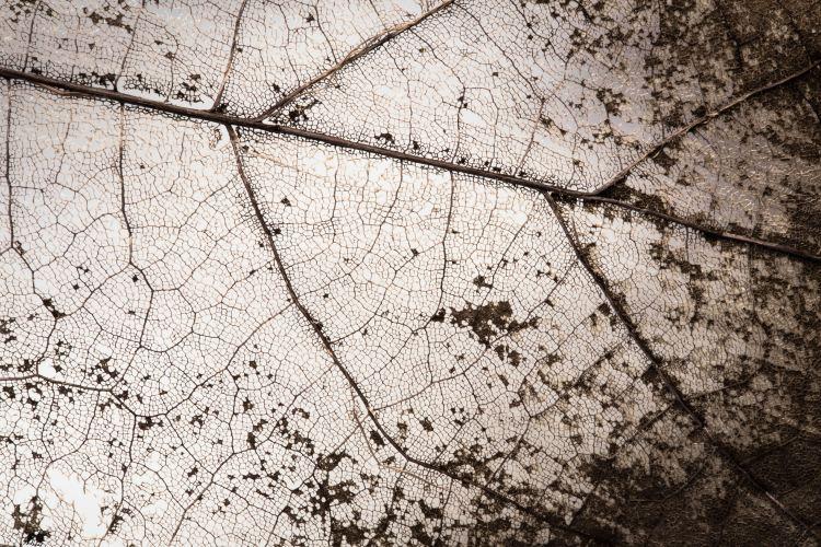 Impressions de rencontre - feuilles