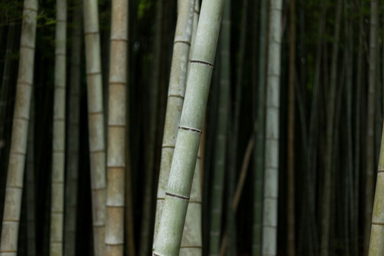 Impressions de rencontre - 1/3 bambous
