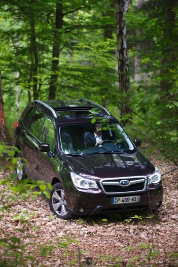 Forester 17
