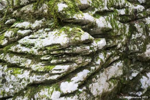 Bloc de calcaire dans la forêt