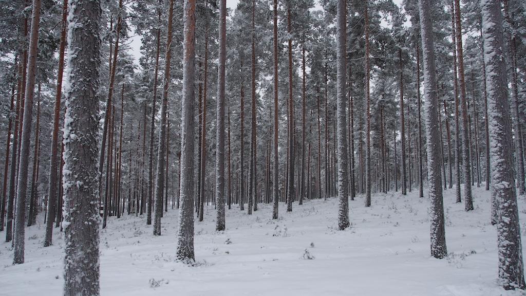 Ruokkeen Lomakylä Oy 2016 © Michael André Ankermüller