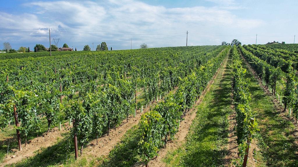 Wein, Wein, Wein 2015 © Michael André Ankermüller