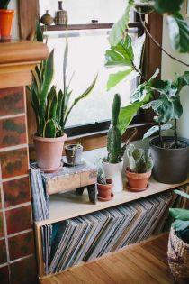 cactus_suculentas_terrarios_11