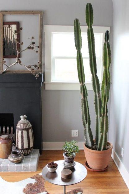 cactus_suculentas_terrarios_13