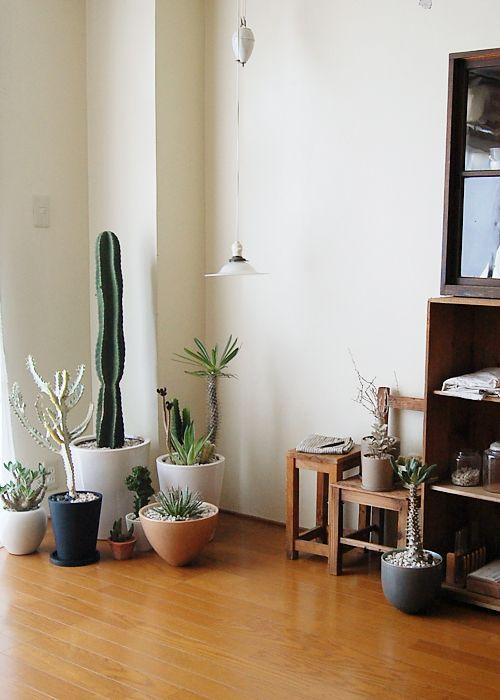 cactus_suculentas_terrarios_27