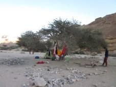 Nachtlager unter Akazie