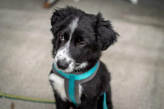 Noch nie waren so viele Hunde auf einem Testival zu Gast. Eine Entwicklung, die uns sehr gefällt!