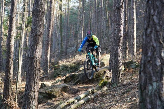 Testort: Pfälzer Wald, Wasgau