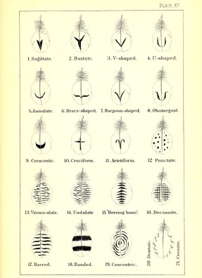 Feather diagrams from Robert Ridgway's 'A nomenclature of colors for naturalists : and compendium of useful knowledge for ornithologists' (1886) (via Smithsonian Libraries)