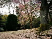 Jardines de Ryōan-ji, Kyōto