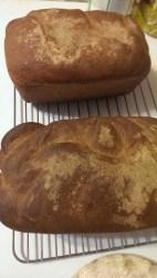Wheat Germ Whole Wheat Bread