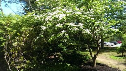 Beautiful Tree in the Garden