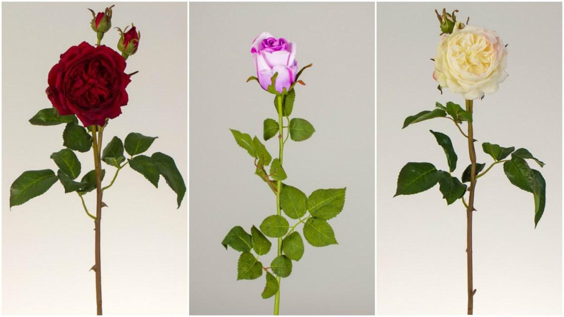 rosas flores decoração florae blog da ana